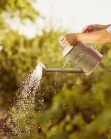Ogród eko – jak wzbogacić glebę w takim ogrodzie, aby rośliny były w dobrej kondycji?